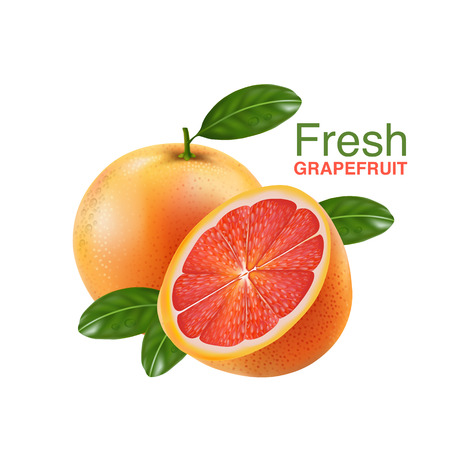 fresh grapefruit vector Illustration