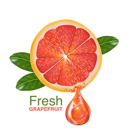 sliced fruit: fresh grapefruit vector Illustration
