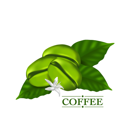 Green coffee beans with leaf vector illustration