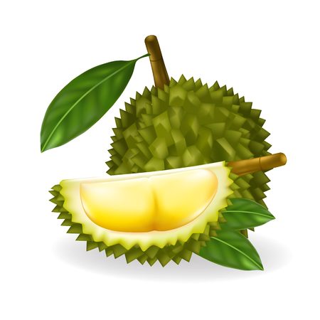 King of fruits, durian isolated on white background.Vector illustration Foto de archivo - 101269864