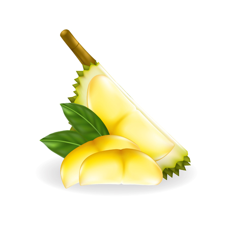 King of fruits, durian isolated on white background.Vector illustration