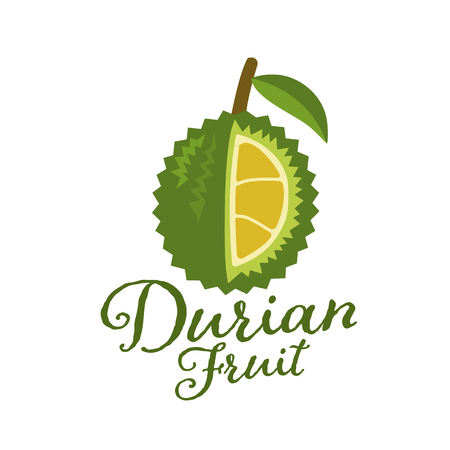 King of fruits, durian Vector illustration