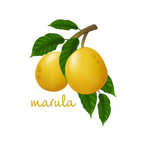 Frutto di Marula