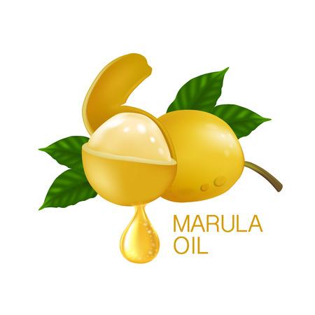 Marula fruit Illustration