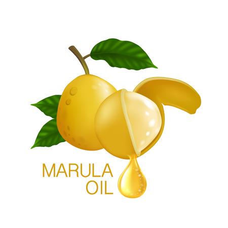 Marula fruit 向量圖像