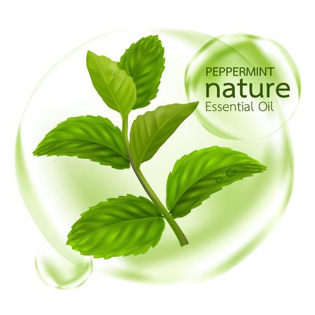Peppermint leaf, Nature Essential oil Vettoriali