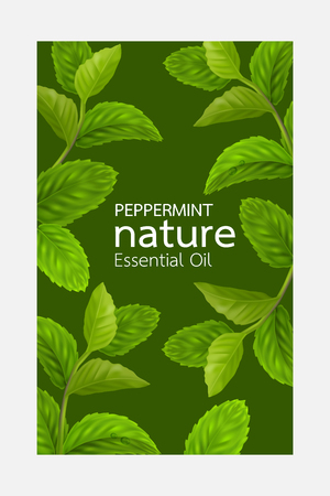 Peppermint leaf, Nature Essential oil Vettoriali