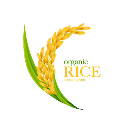 Rice realistic