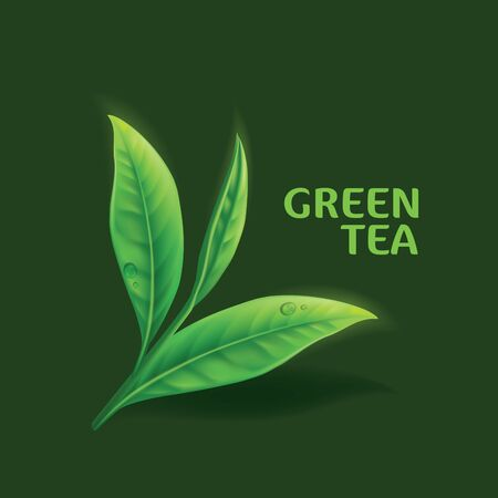 Green Tea Drink Packaging Mockup. Realistic green tea leaves background for advertising poster. Vector illustration
