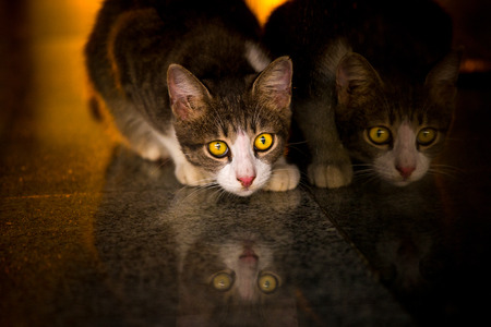 Reflection of cat while looking for food,and light at sunset 스톡 콘텐츠