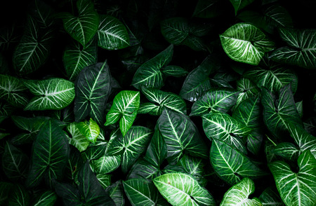 Leaf background,Green leaves background texture