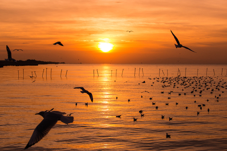 The beauty of the seagull on the sea at sunset,sunrise Foto de archivo