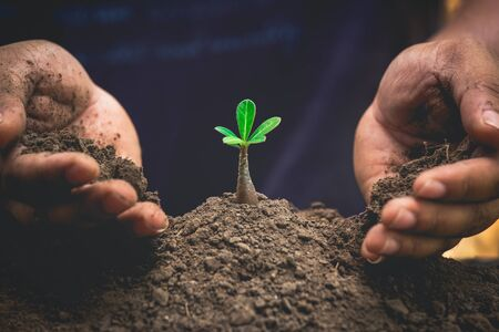 hands protecting plant growing on soil.protect nature and environment concept