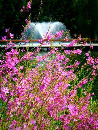 waterside: Wild flowers in the Waterside