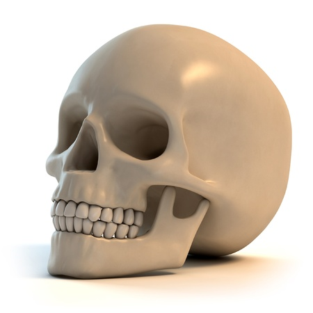 human skull 3d illustration  illustration