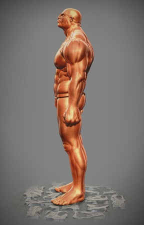 muscle man figure side view photo