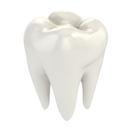 tooth root: isolated tooth 3d illustration