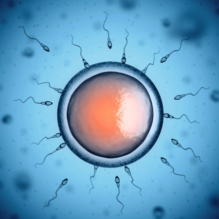 sex cell: human sperm cells around egg cell Stock Photo