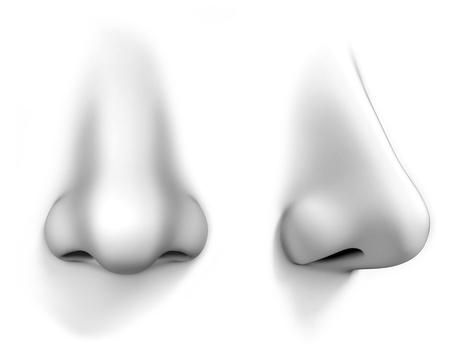 olfato: nariz humana aísla en el fondo blanco