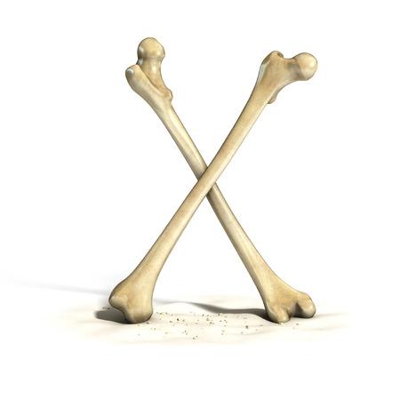 huesos humanos: huesos fuente de la letra X