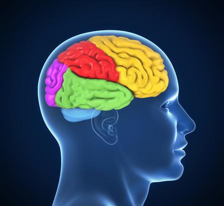 cabeza: cerebro humano 3d ilustración Foto de archivo
