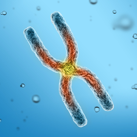 chromosomes: chromosomes 3d illustration