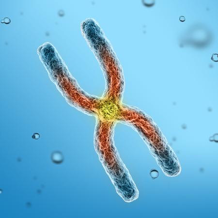 chromosome x y: chromosomes 3d illustration