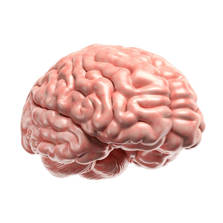 3d: Human brain 3d illustration Stock Photo