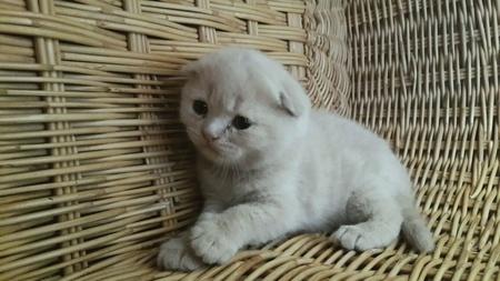 doll: Kitten playing inside basket.