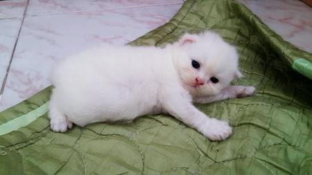 doll: Kitten lying on blanket.