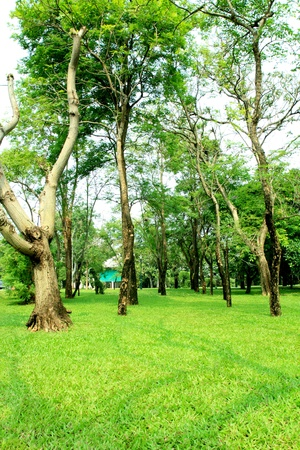 Many  tree  for give shine  green with you. photo
