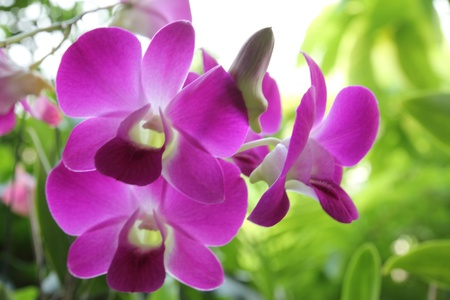This is orchid  flowers beautiful in thailand. Stock Photo