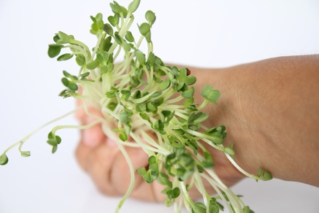 unevenly: a vegetables food  japan with for you. Stock Photo