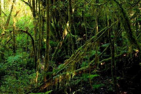 Angka Rain forest at Doi inthanon,Chiang Mai Province, Thailand. photo