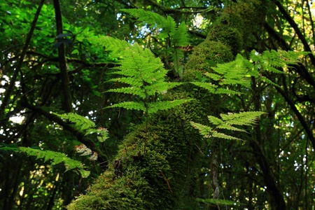 Angka Rain forest at Doi inthanon,Chiang Mai Province, Thailand. Stock Photo - 12719811