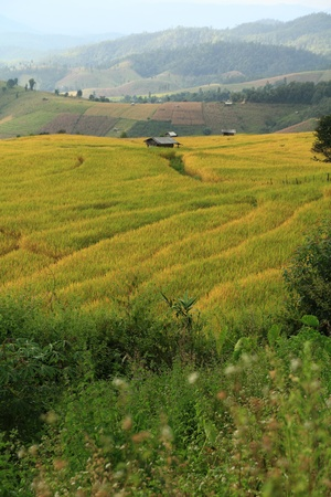 Ban Pong Peang rice terraces  in Chang Mai,Thailand. Stock Photo - 13035603