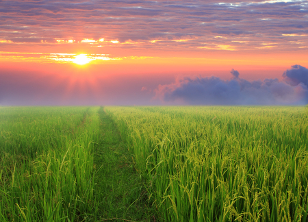 beautyful: Sunrise and  green field  is landscape beautyful.