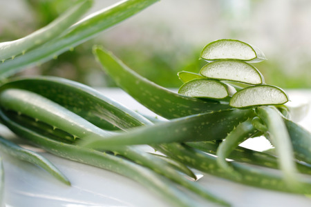A aloe vera you apply for health and beautiful. Stock Photo