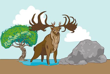 elk: elk