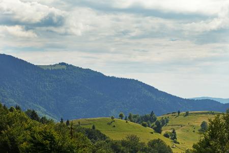 mnich: Carpathian forest. Sunny day in Ukraine