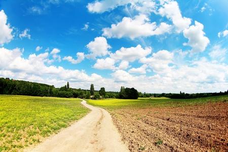 earth road: strada sterrata in campo sotto il cielo blu