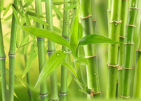 Bambouseraie sous les tropiques