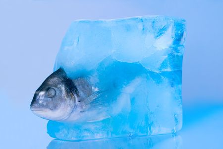 silver perch: fish in the ice