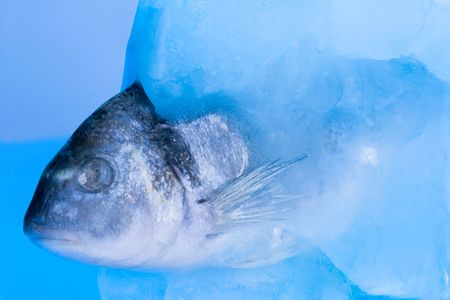 fish in the ice photo