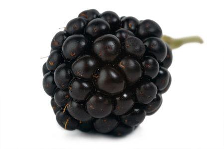 blackberry bush: dewberry isolated
