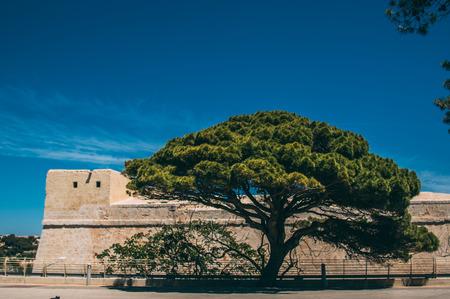 Big tree near Mdina, blue sky on background, Malta
