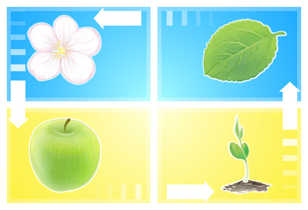 appear: Cycle of nature on a background of blue sky and ripe wheat. Apple flower turns into a fruit, the fruit falls to the ground and turns into germ apple, he becomes a tree, leaves and flowers appear. Illustration