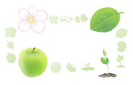 appear: For example, the cycle of nature apple. Apple flower turns into a fruit, the fruit falls to the ground and turns into apple sprout, sprout becomes a tree, leaves and flowers appear. Cycle is closed. Illustration