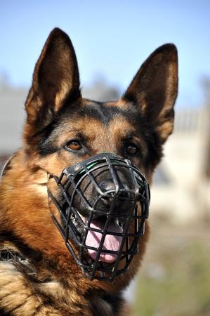 perro policia: retrato del pastor alemán