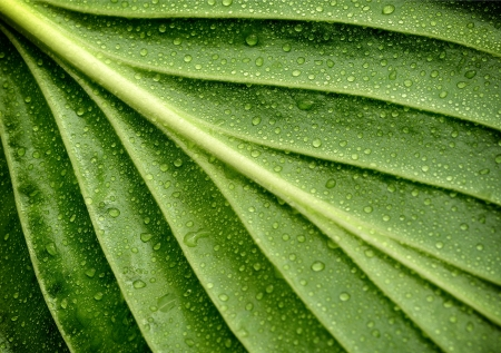 water on leaf: leaf with drops of water  Stock Photo